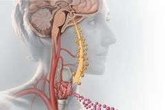 Thyroid & Weight